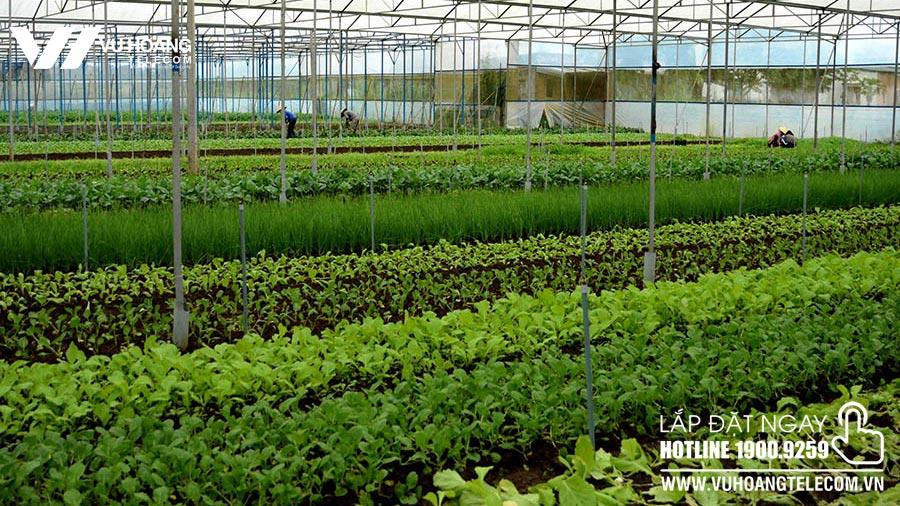 Lắp đặt camera cho trang trại trồng trọt