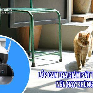 Việc lắp camera giám sát thú cưng nên hay không?